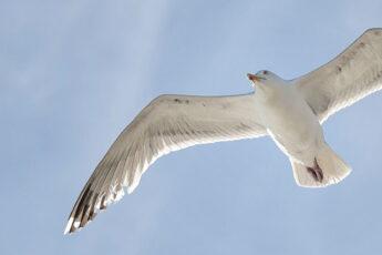 Fliegender Vogel: Fragen sind wie Flügel